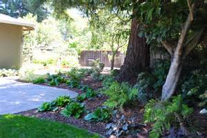Shade Garden Under Trees Ideas