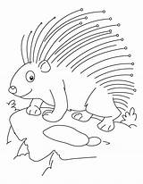 Porcupine Coloring Pages Printable Threatened Cute Animal Getcoloringpages Baby Puffer Getcolorings Fish Print sketch template