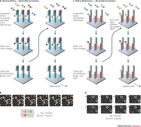 Sequencing Illumina by Molecular Genetics Is Sequencing Error A Function Of The