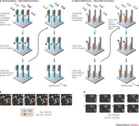 Sequencing Illumina Molecular Genetics Is Sequencing Error A Function Of The