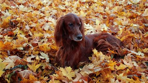 Fall Wallpaper With Animals - animal fall wallpaper 60 images