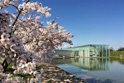 Japanischer Garten Düsseldorf Kirschblüte by Japanische Kirschbl 252 Te Trifft Japanische Architektur