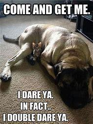 I Dare You Funny Animals