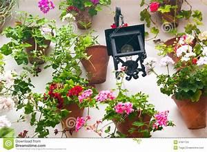 Mur De Fleurs : pots de fleurs et fleur rouge sur un mur blanc avec la lanterne de vintage image stock image ~ Farleysfitness.com Idées de Décoration