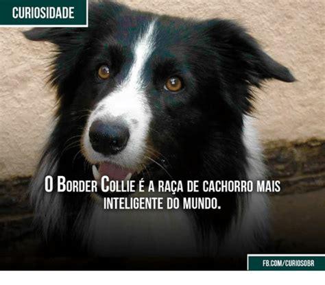 Border Collie Meme - 25 best memes about border collie border collie memes