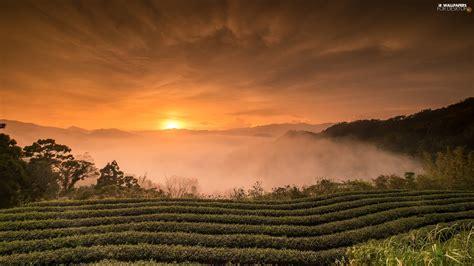 Taiwan, Field, Fog, Sunrise  For Desktop Wallpapers