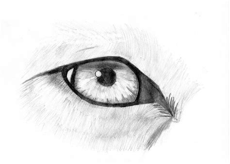 Wolf Eye Sketch By Blackwarrior335