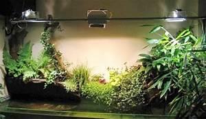 Pflege Von Zimmerpflanzen : weitere kulturmethoden pflege von zimmerpflanzen zimmerpflanzen zimmer und gartenblumen ~ Markanthonyermac.com Haus und Dekorationen