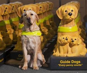 Guide Dogs for the Blind | disabilities? | Pinterest