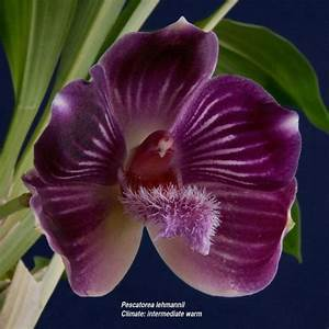 17 Best images about Deep purple flowers on Pinterest ...