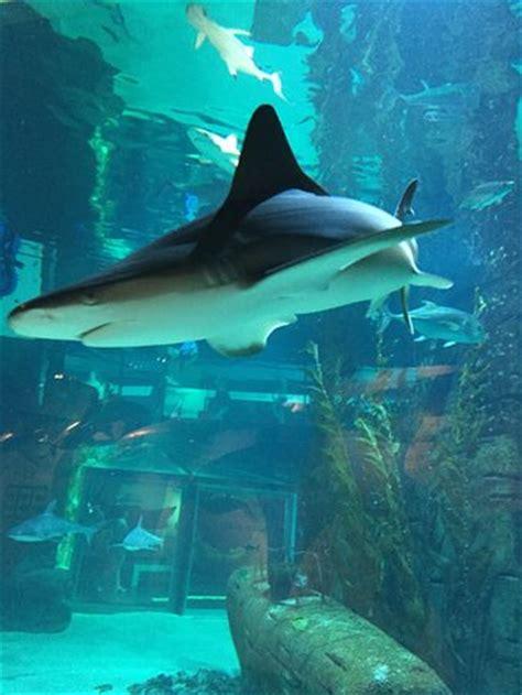 l espace des requins photo de seaquarium le grau du roi tripadvisor