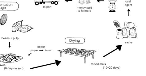 Random Book And Movie Reviews The Diagram Below Shows How Cocoa Beans Are Prepared For Export