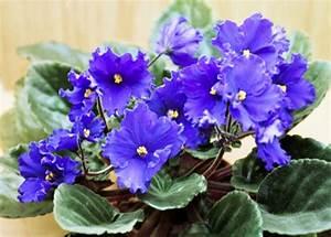 Pflegeleichte Zimmerpflanzen Mit Blüten : pflegeleichte topfpflanzen zimmerpflanzen die wenig licht ben tigen ~ Eleganceandgraceweddings.com Haus und Dekorationen