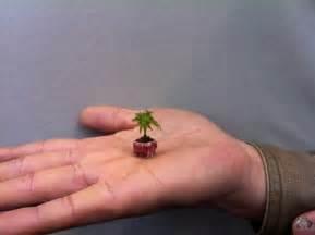 01 smallest bonsai jpg