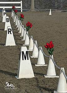 17 best images about arenas on pinterest indoor arena With dressage arena letters for sale