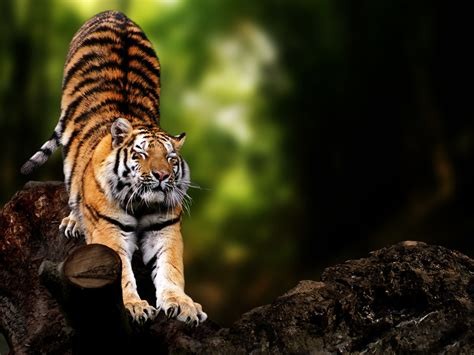 Animals Wallpapers For Windows 7 - hd animal wallpapers best friend wildlife baby