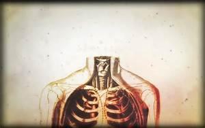 Anatomy human body House M_D_ wallpaper | 1680x1050 ...