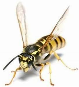 Se Débarrasser Des Guepes Maçonnes : comment se d barrasser des gu pes et abeilles la maison dans notre maison ~ Carolinahurricanesstore.com Idées de Décoration