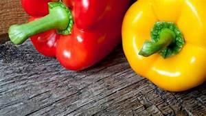 Comment Faire Germer Une Graine : comment faire pousser des graines de poivron fruits et ~ Melissatoandfro.com Idées de Décoration