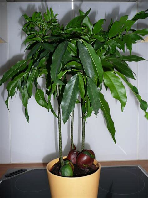 Wie Heißt Meine Zimmerpflanze by Wie Hei 223 T Diese Zimmerpflanze Mit Bild Mein Sch 246 Ner