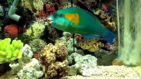 jenis ikan hias air laut indah ketika aquarium
