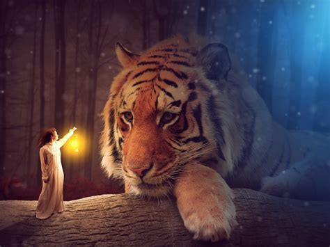 wallpaper big tiger fairy woman lantern  creative