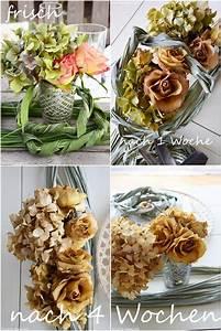 Hortensien Haltbar Machen : wie ihr rosen seidig weich trocknet rosen trocknen hortensien und blumenstrau trocknen ~ A.2002-acura-tl-radio.info Haus und Dekorationen