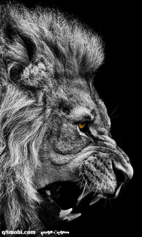 success quotes  lion quotesgram