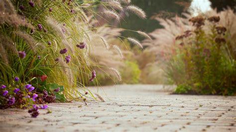 mood asphalt tile flower flowers purple ears background