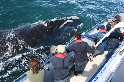 Whale Watching Tour  Cape Town  Detour Africa