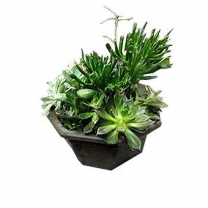 Succulent Plants Garden Dish Flowers Euro Gardens