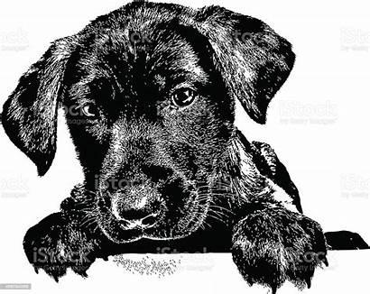 Labrador Vector Dog Retriever Puppy Illustration Clip