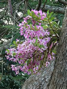 snapshots of the orchid tree up the road
