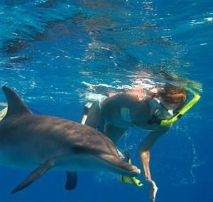 marineland rencontre avec les dauphins