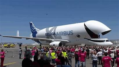Beluga Airbus Plane Cargo Xl Airplane Whale