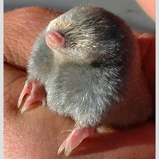 The Difference Between Moles And Voles  Landscaping Tips