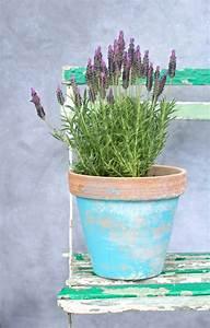 Plant De Lavande : planter de la lavande id es conseils et astuces ~ Nature-et-papiers.com Idées de Décoration