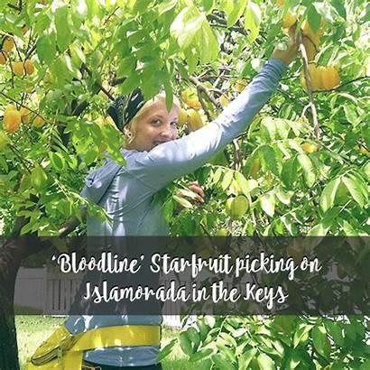 Starfruit Ripe Flipbook Bloodline Wandered Islamorada Onto