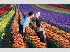 Tesselaar Tulip Festival Silvan, Australia on 13