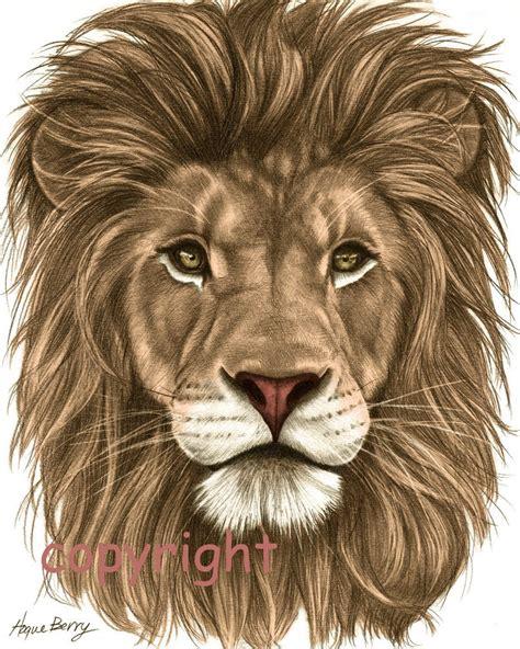 lion pencil drawing colored  fine art print
