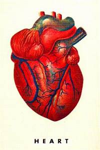 Full Picture Real Human Body | Real Human Heart | HUMAN ...