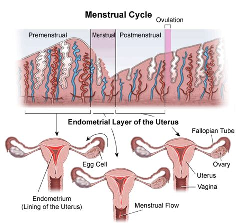 what are the symptoms of pcos