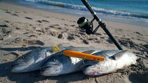 fishing surf lure bluefish fish nuts giant go