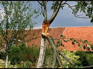 Comment Creuser Un Tronc D Arbre : r parer un arbre apr s la temp te youtube ~ Melissatoandfro.com Idées de Décoration