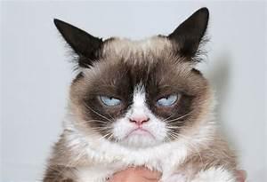 Goodbye Grumpy Cat, Hello Lil Bub!