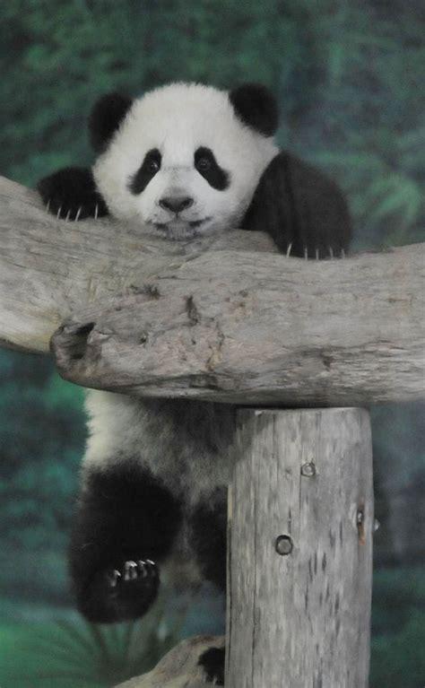 endangered species top  facts  extinction top