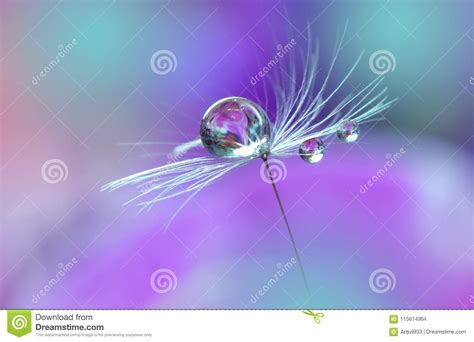 Beautiful Nature Background Art Photography Floral Fantasy