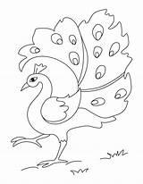 Peacock Coloring Printable Pages Drawing Bird Azcoloring Gemerkt Von sketch template