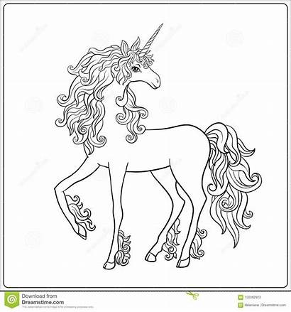 Unicorn Outline Drawing Coloring Adult Vector Illustration