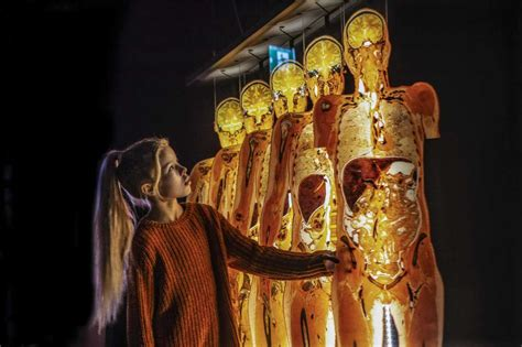 More than 100 bodies on display as 'Body Worlds' returns ...